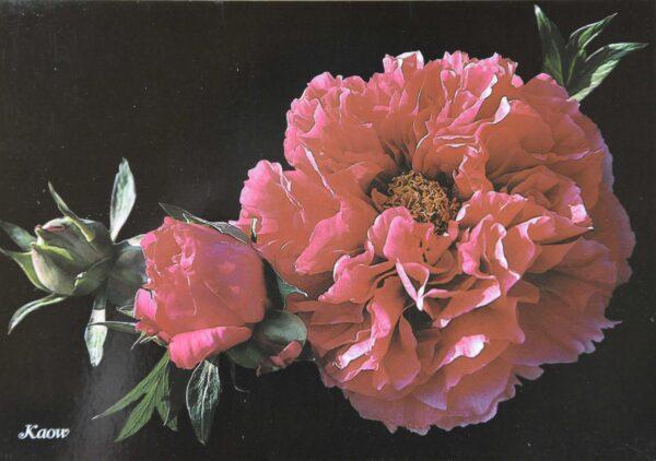 Carte Postale 'KAOW'-0