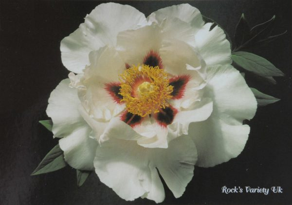 Carte Postale 'ROCK'S VARIETY'-0