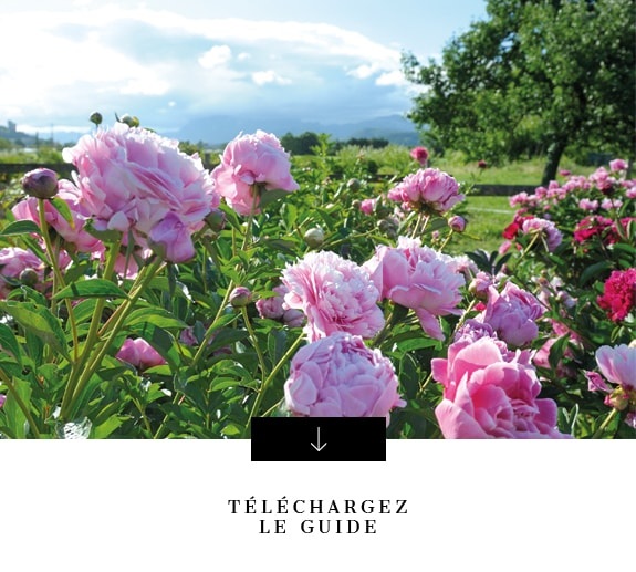 Télécharger guide comment planter pivoines