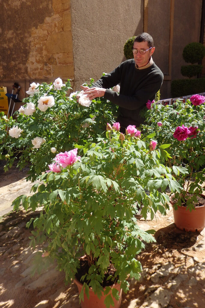 Nos grands sujets de pivoines arbustives 3